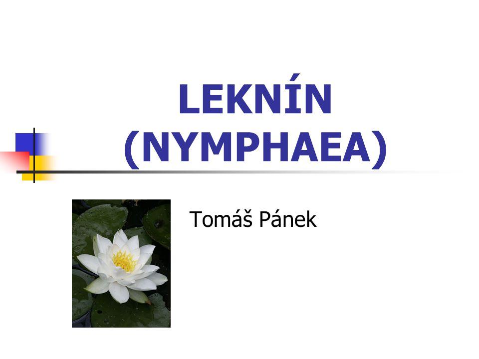 LEKNÍN (NYMPHAEA) Tomáš Pánek