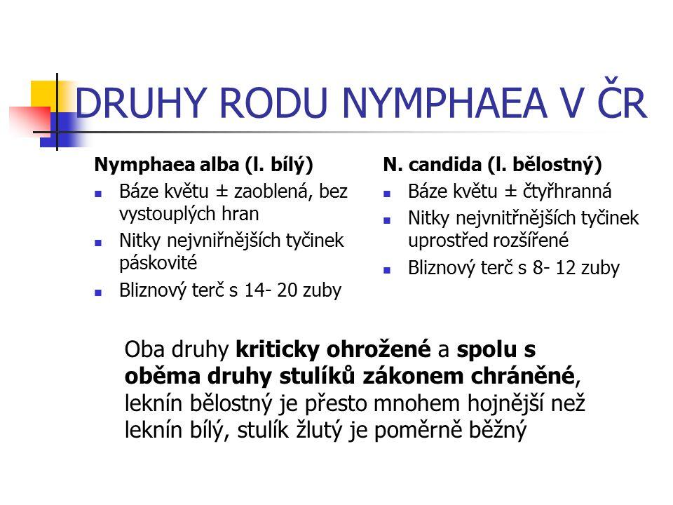 DRUHY RODU NYMPHAEA V ČR