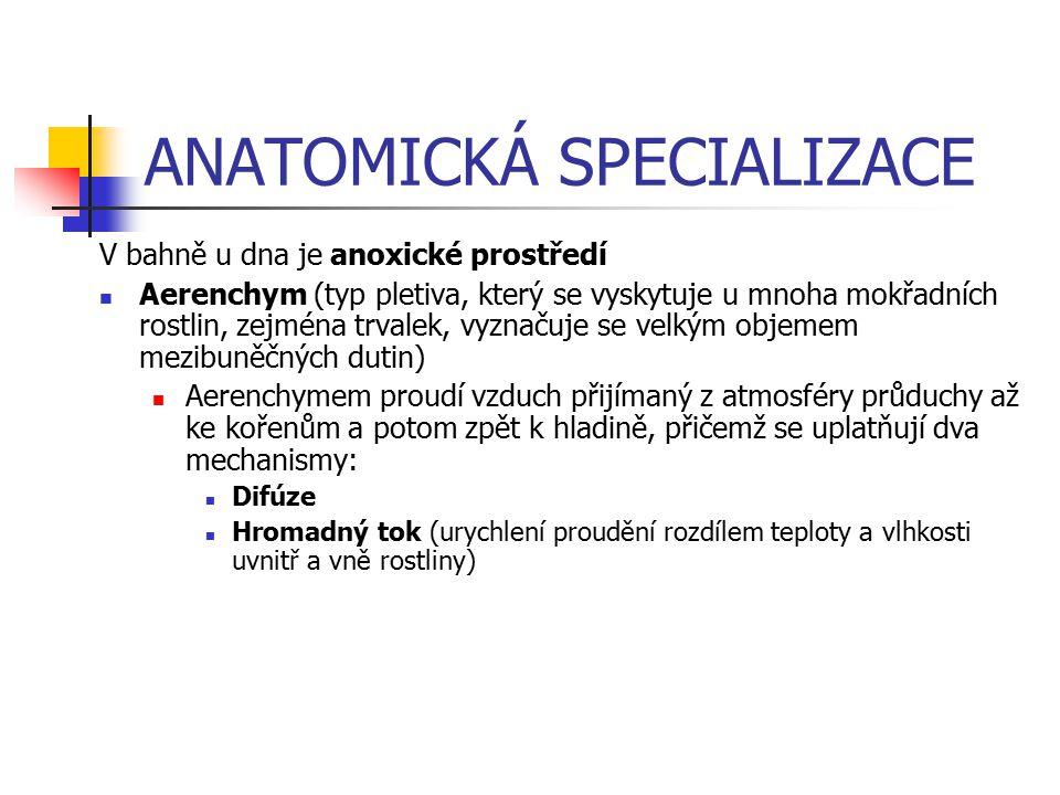 ANATOMICKÁ SPECIALIZACE