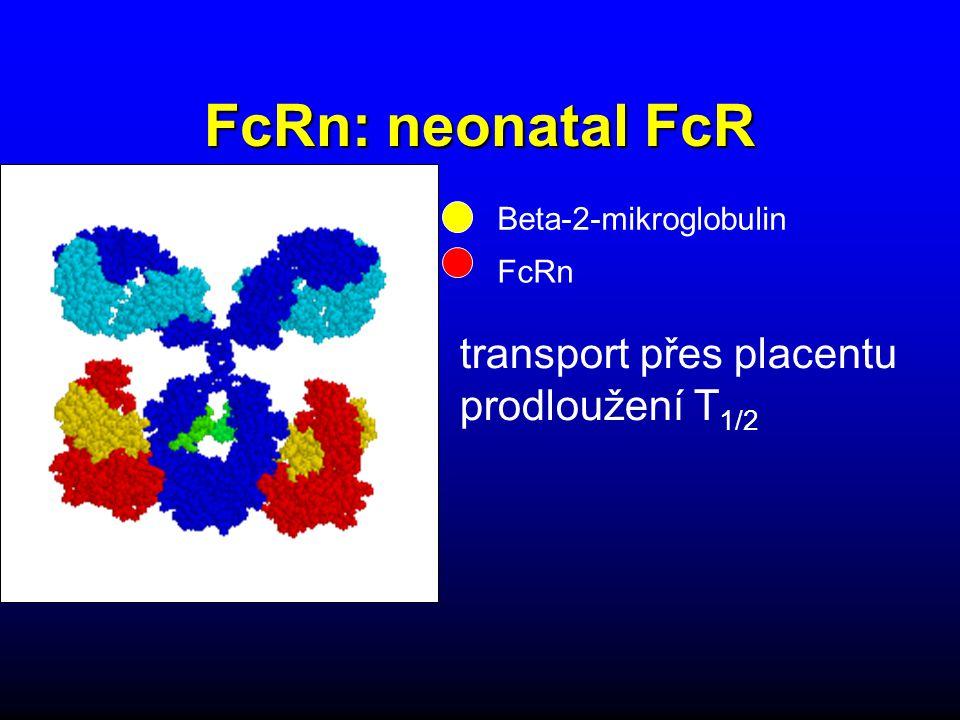 FcRn: neonatal FcR transport přes placentu prodloužení T1/2
