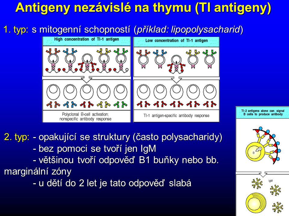 Antigeny nezávislé na thymu (TI antigeny)