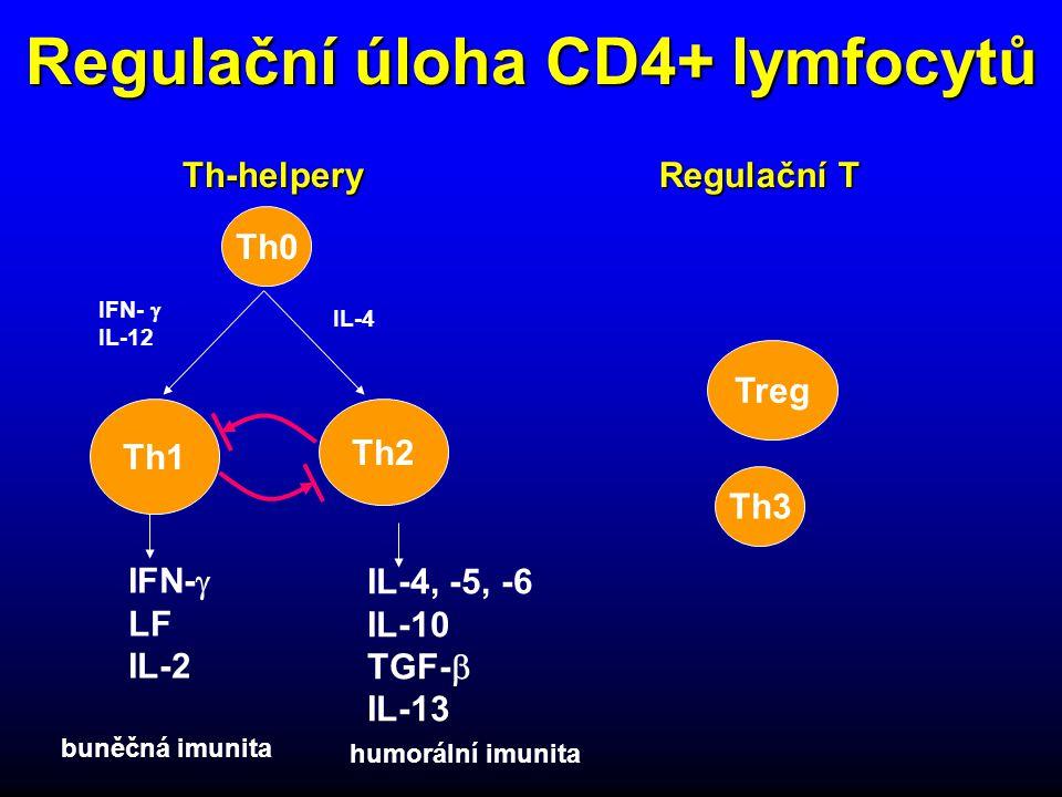Regulační úloha CD4+ lymfocytů