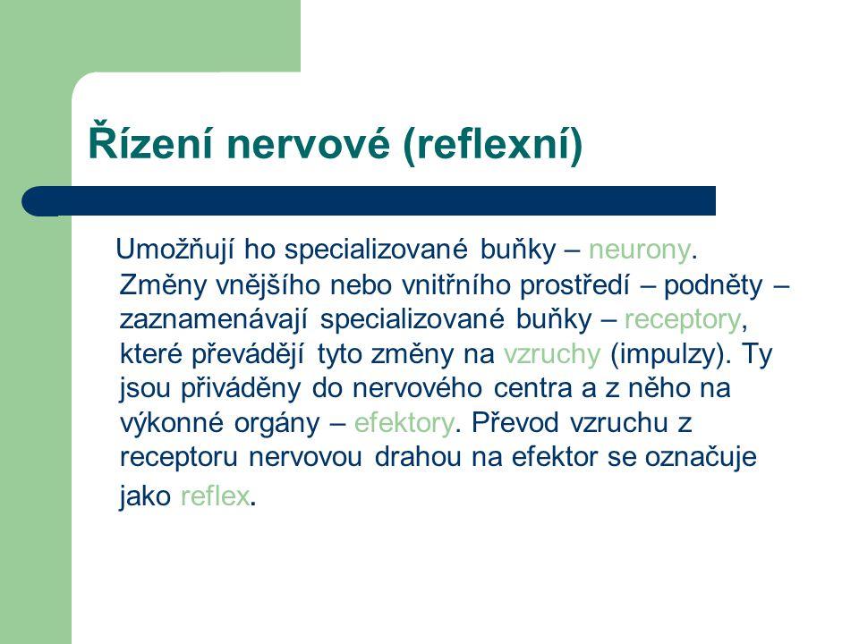 Řízení nervové (reflexní)