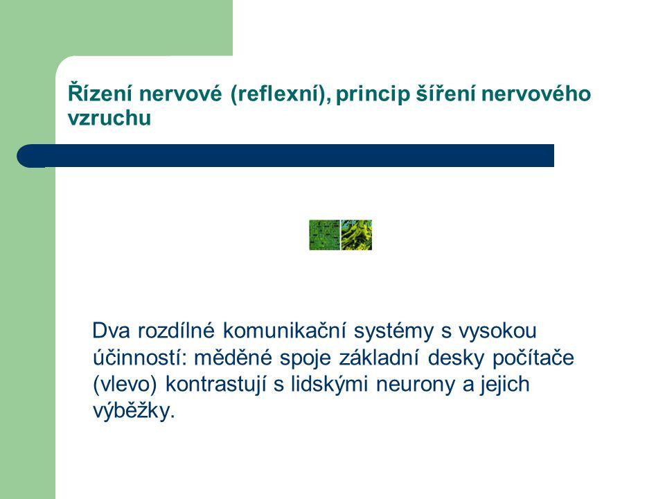 Řízení nervové (reflexní), princip šíření nervového vzruchu