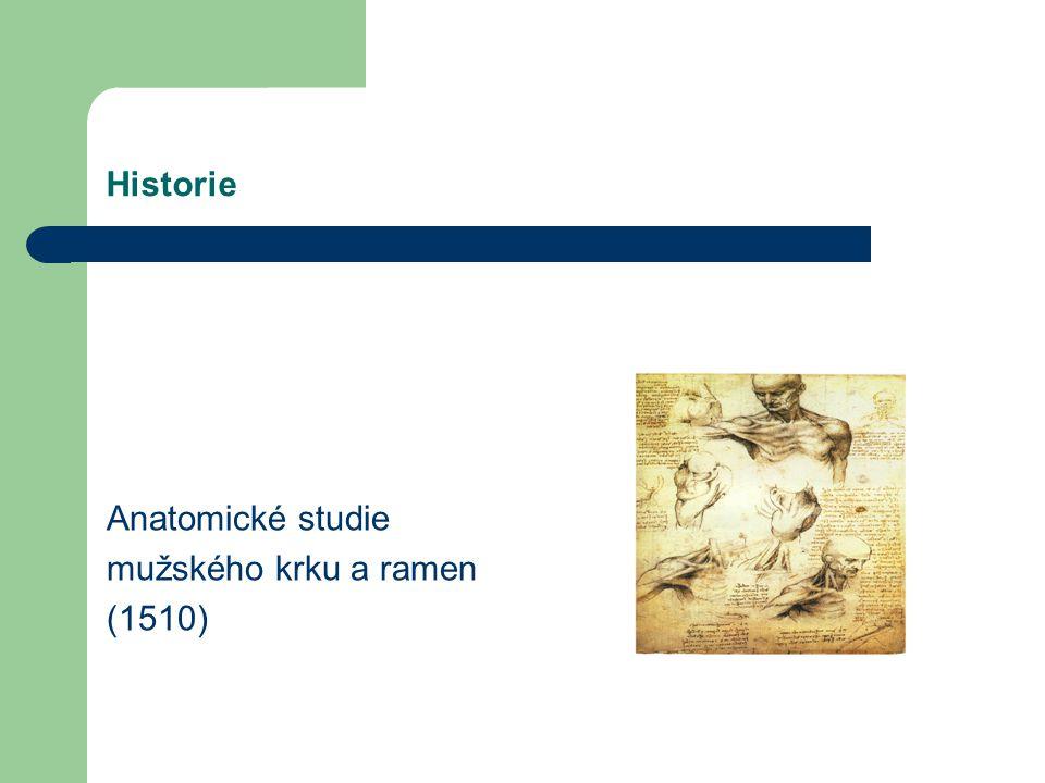 Historie Anatomické studie mužského krku a ramen (1510)