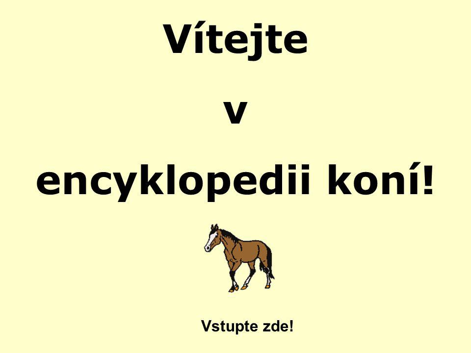 Vítejte v encyklopedii koní!
