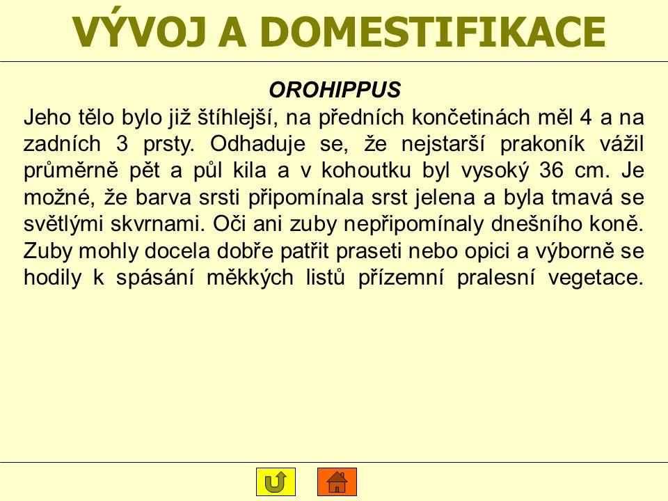 VÝVOJ A DOMESTIFIKACE OROHIPPUS
