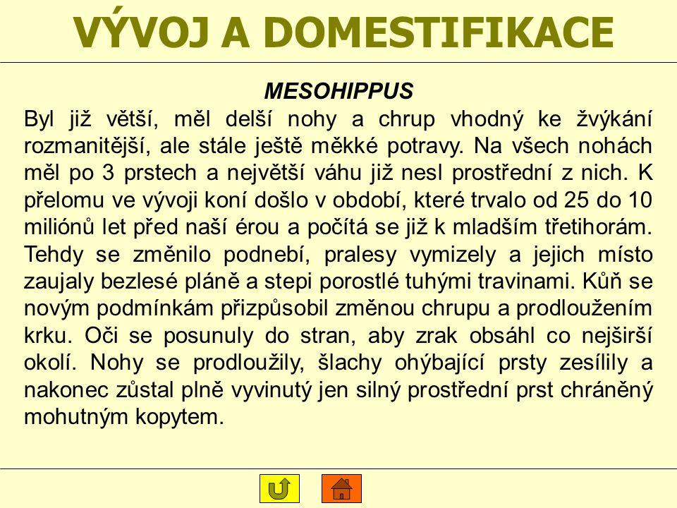 VÝVOJ A DOMESTIFIKACE MESOHIPPUS