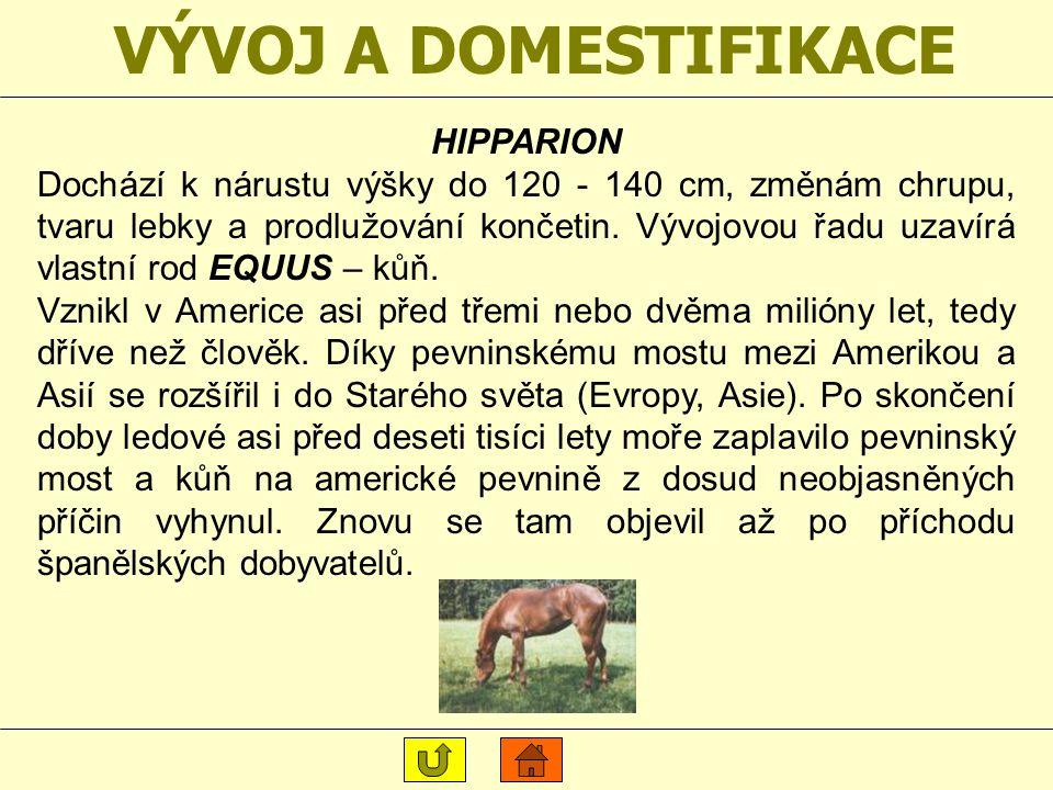 VÝVOJ A DOMESTIFIKACE HIPPARION
