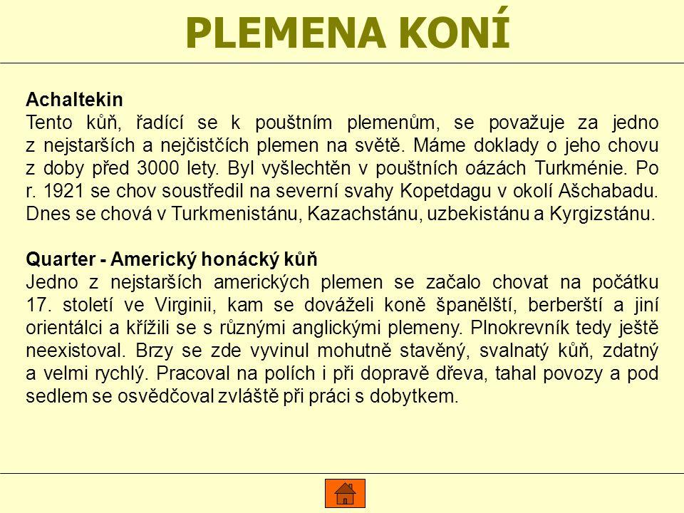 PLEMENA KONÍ Achaltekin