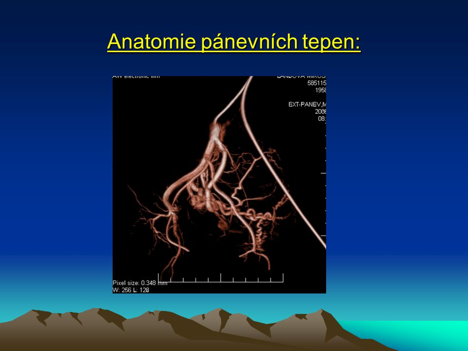 Anatomie pánevních tepen: