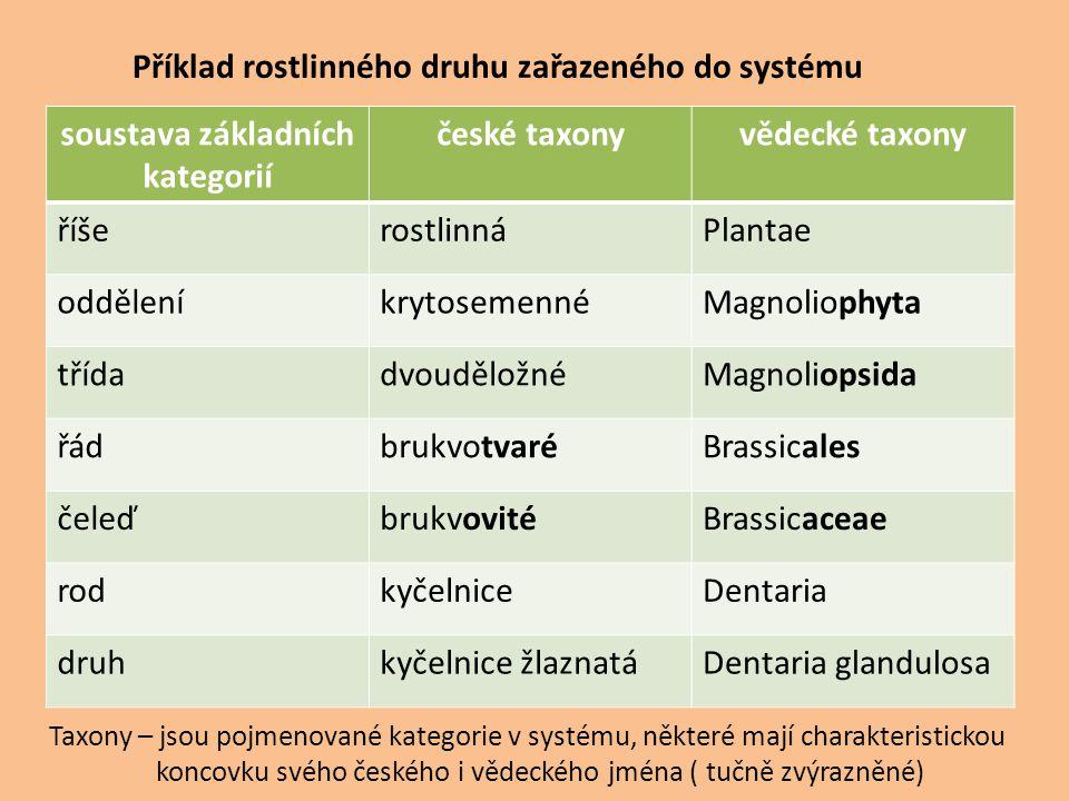 soustava základních kategorií