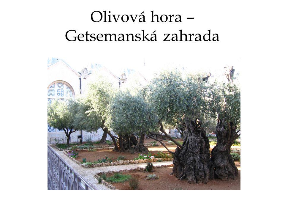 Olivová hora – Getsemanská zahrada