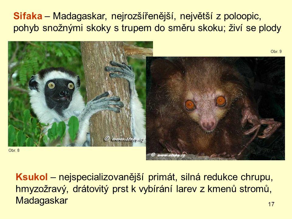 Sifaka – Madagaskar, nejrozšířenější, největší z poloopic,