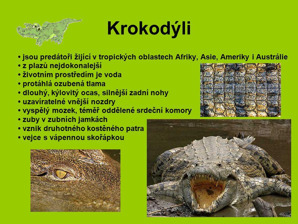 Krokodýli • jsou predátoři žijící v tropických oblastech Afriky, Asie, Ameriky i Austrálie. • z plazů nejdokonalejší.