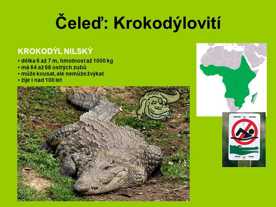 Čeleď: Krokodýlovití KROKODÝL NILSKÝ