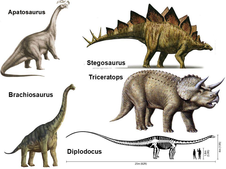 Stegosaurus Triceratops Brachiosaurus Diplodocus