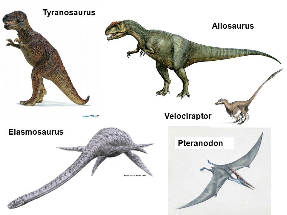 Tyranosaurus Allosaurus Velociraptor Elasmosaurus Pteranodon