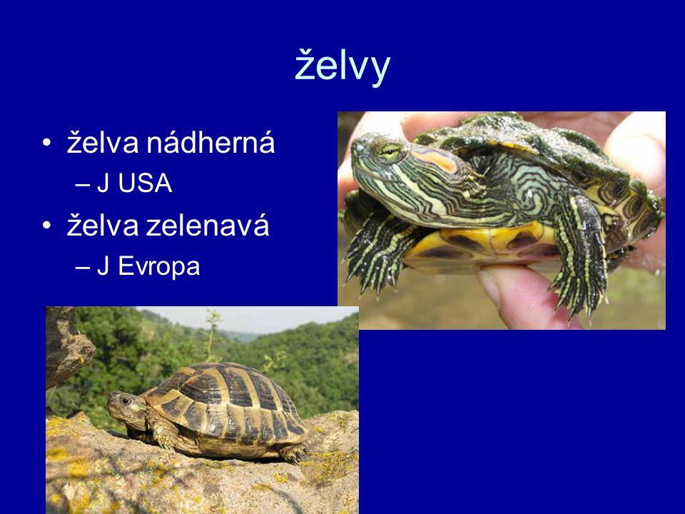 želvy želva nádherná J USA želva zelenavá J Evropa
