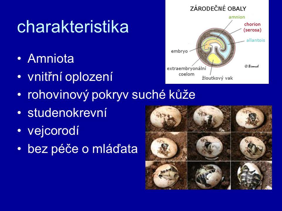 charakteristika Amniota vnitřní oplození rohovinový pokryv suché kůže