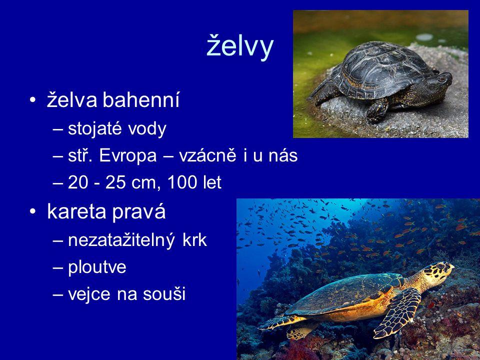 želvy želva bahenní kareta pravá stojaté vody