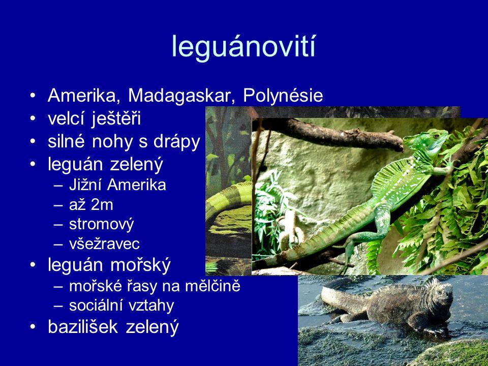 leguánovití Amerika, Madagaskar, Polynésie velcí ještěři