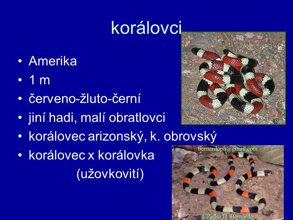 korálovci Amerika 1 m červeno-žluto-černí jiní hadi, malí obratlovci