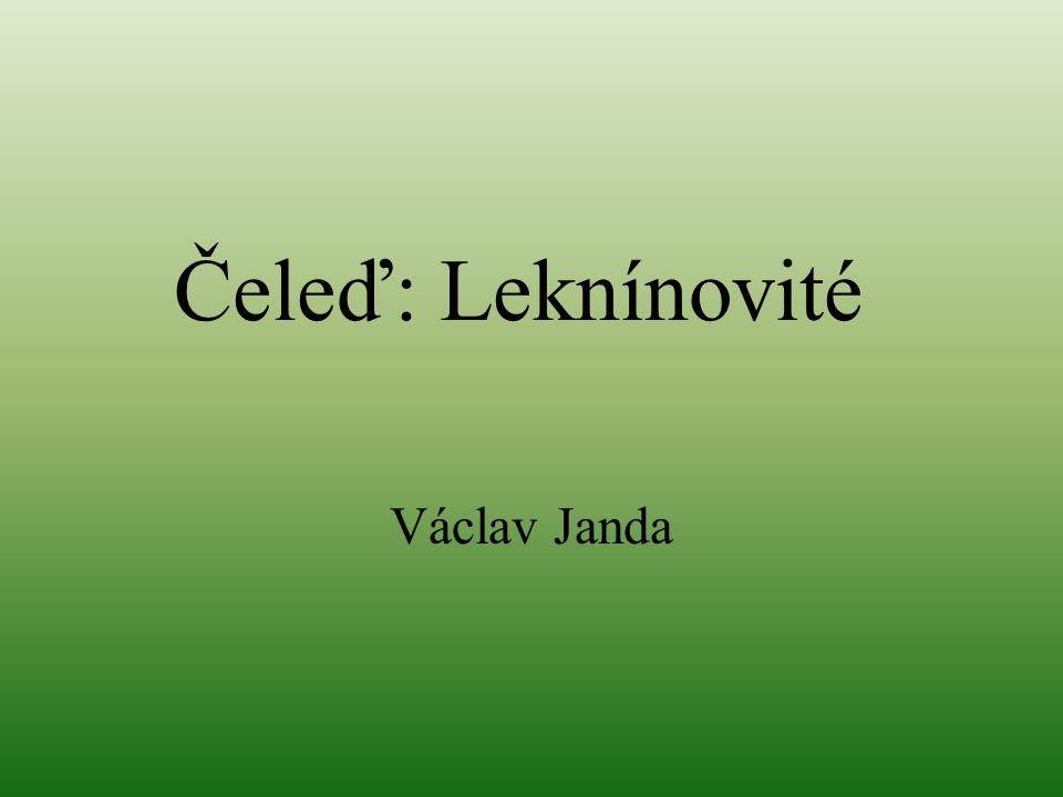 Čeleď: Leknínovité Václav Janda