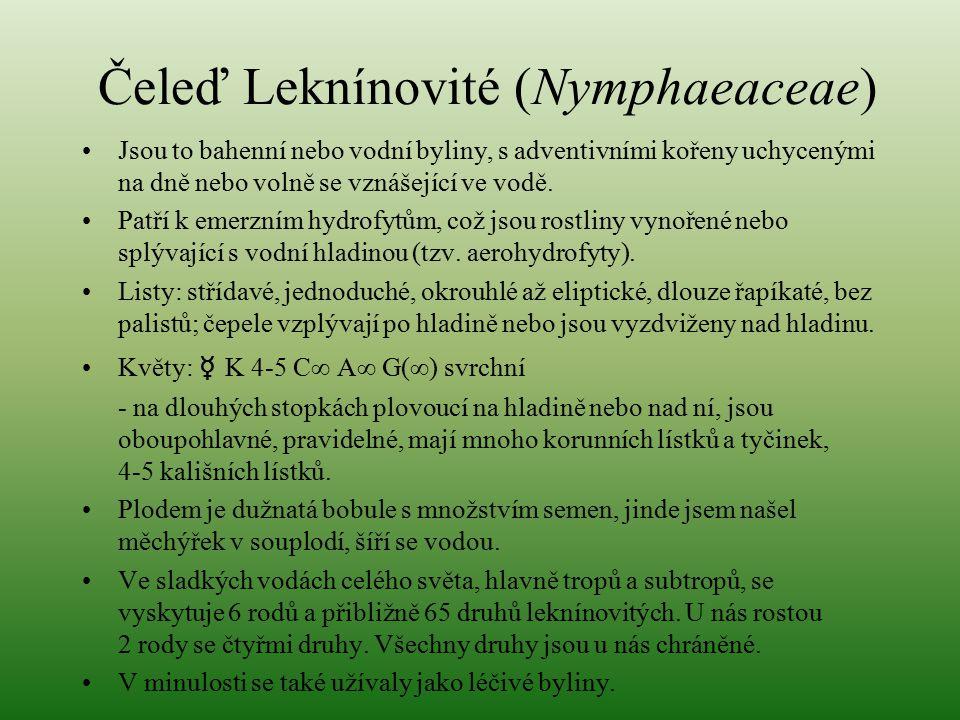 Čeleď Leknínovité (Nymphaeaceae)