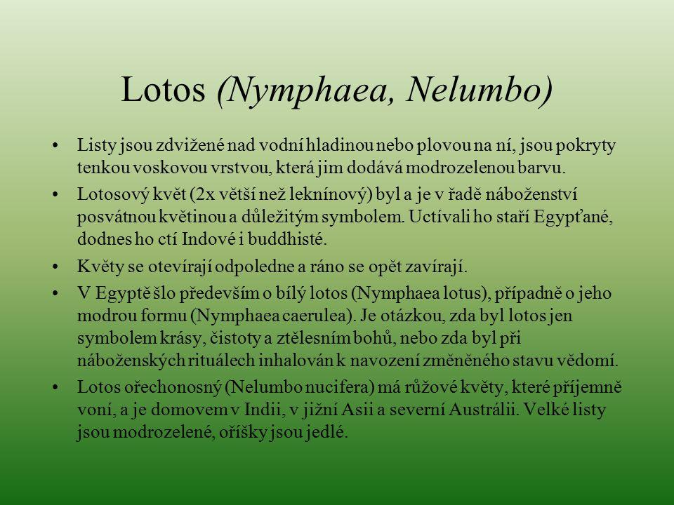 Lotos (Nymphaea, Nelumbo)