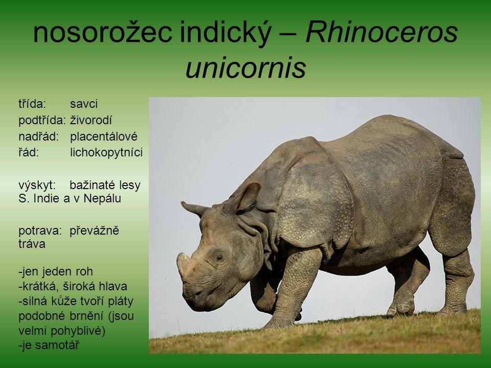 nosorožec indický – Rhinoceros unicornis