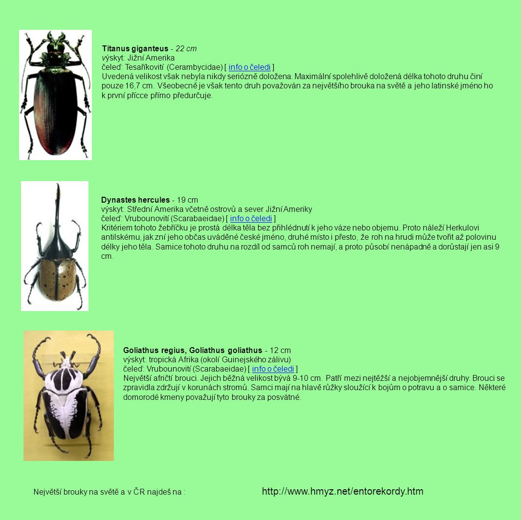 http://www.hmyz.net/entorekordy.htm Titanus giganteus - 22 cm
