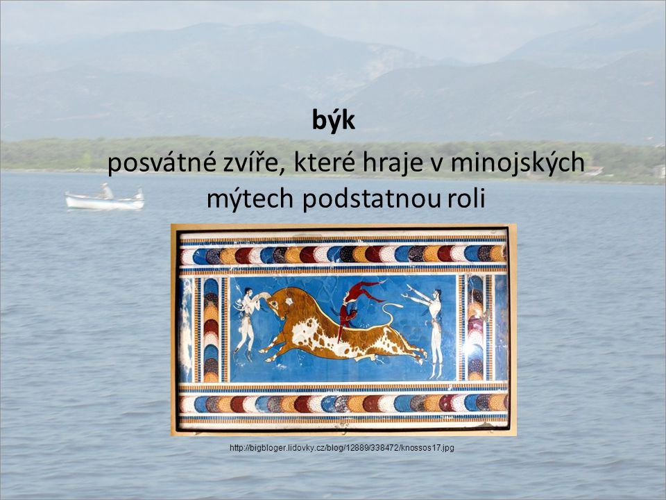 býk posvátné zvíře, které hraje v minojských mýtech podstatnou roli