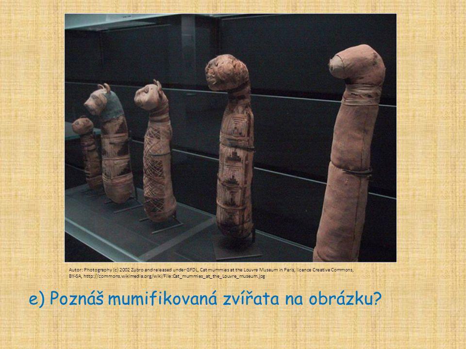e) Poznáš mumifikovaná zvířata na obrázku
