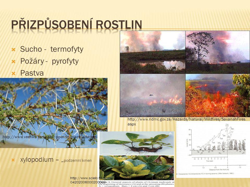 Přizpůsobení rostlin xylopodia Sucho - termofyty Požáry - pyrofyty
