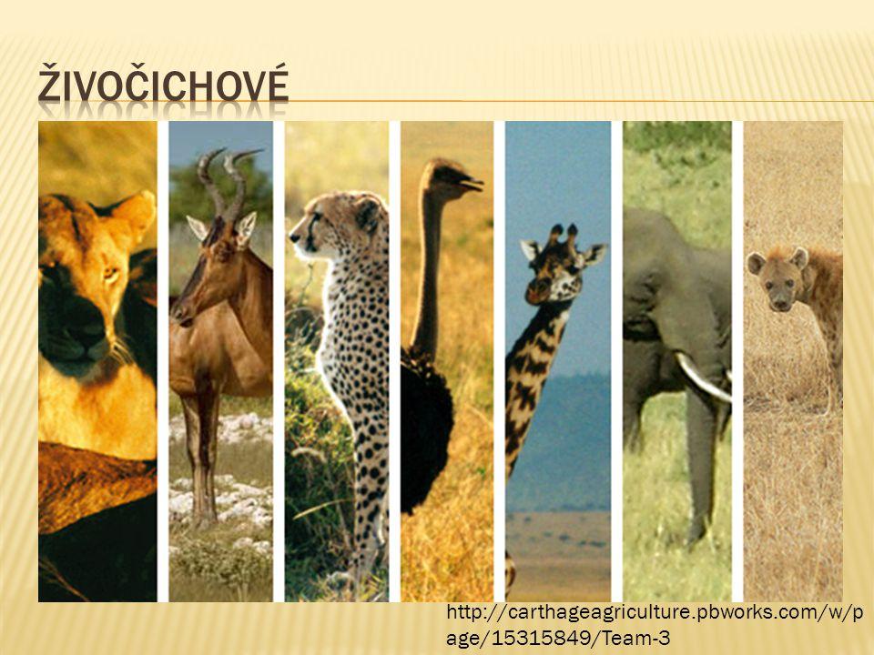 živočichové http://carthageagriculture.pbworks.com/w/page/15315849/Team-3