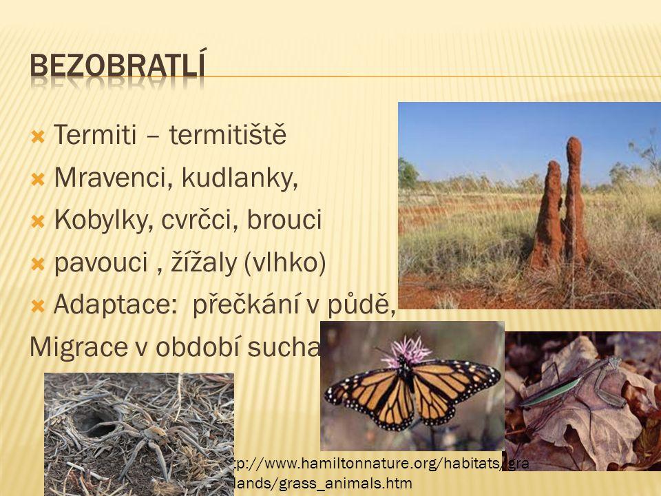 bezobratlí Termiti – termitiště Mravenci, kudlanky,