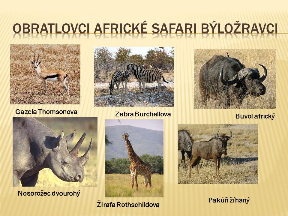 Obratlovci africké safari býložravci