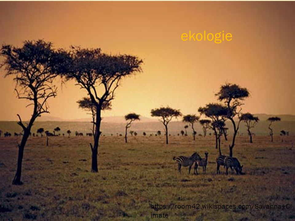ekologie https://room42.wikispaces.com/Savanna+Climate