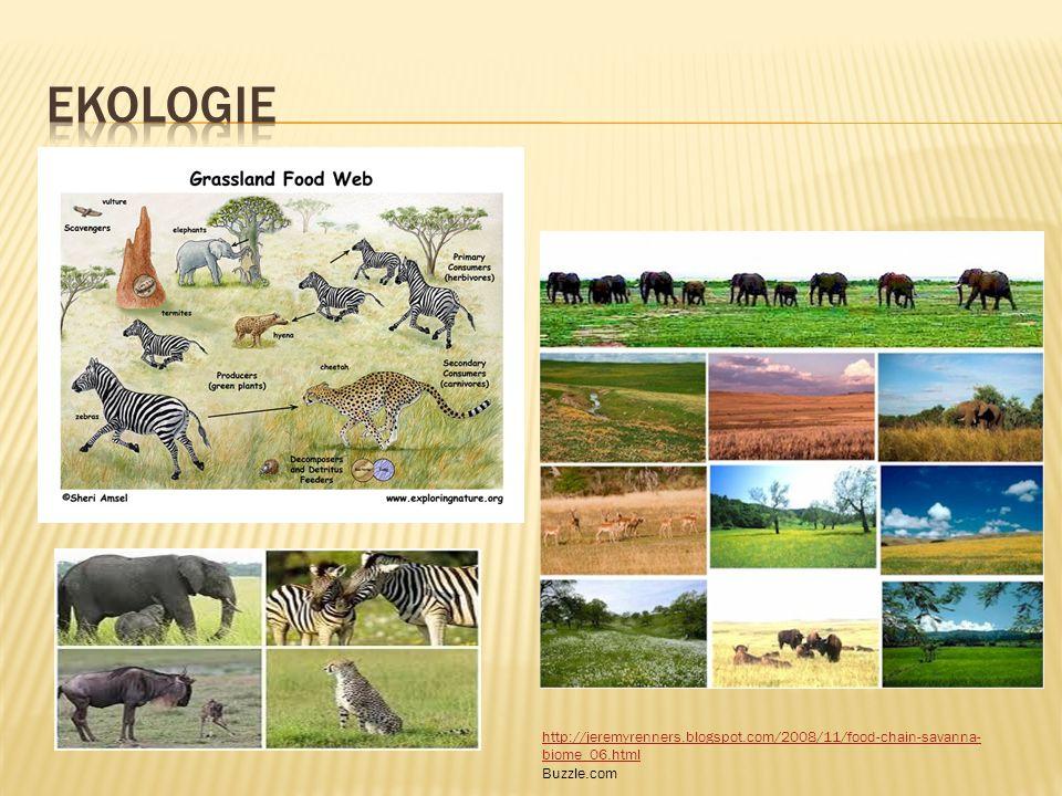 ekologie http://jeremyrenners.blogspot.com/2008/11/food-chain-savanna-biome_06.html Buzzle.com