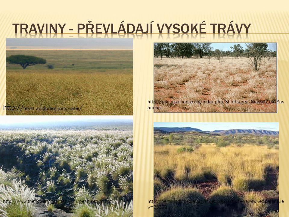 Traviny - převládají vysoké trávy