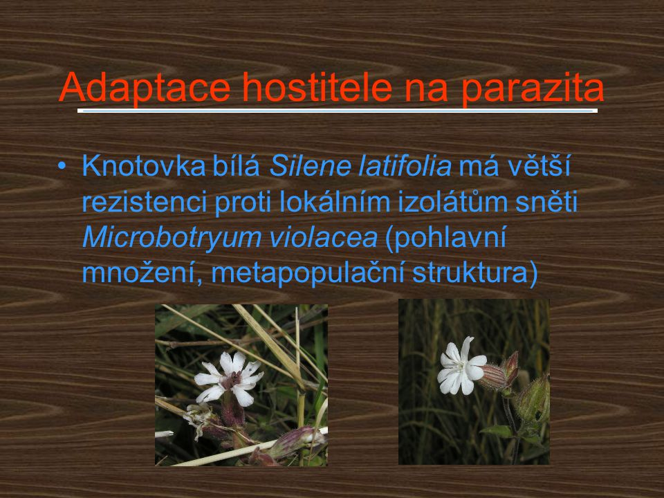 Adaptace hostitele na parazita