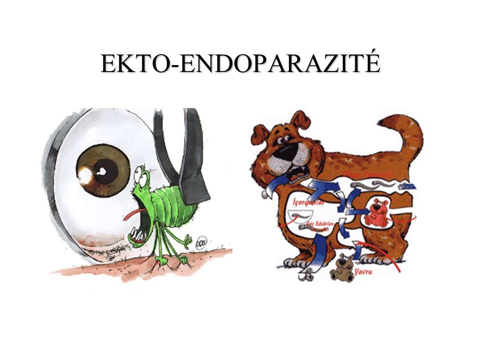 EKTO-ENDOPARAZITÉ