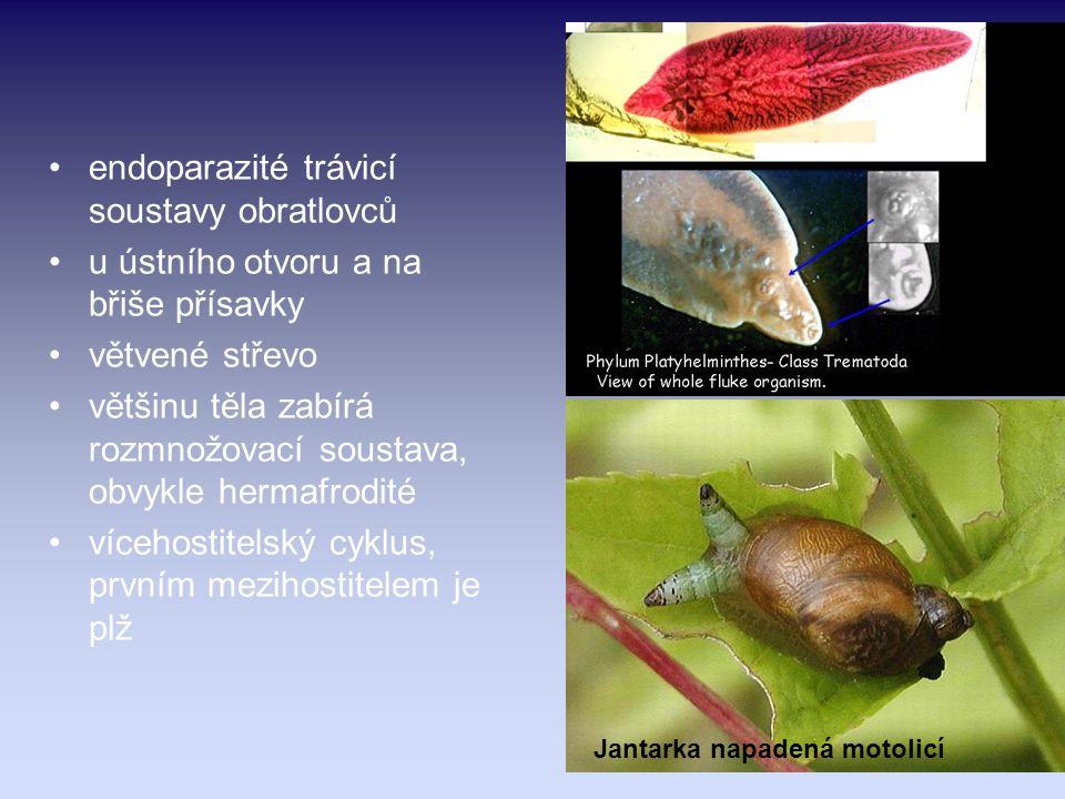 endoparazité trávicí soustavy obratlovců