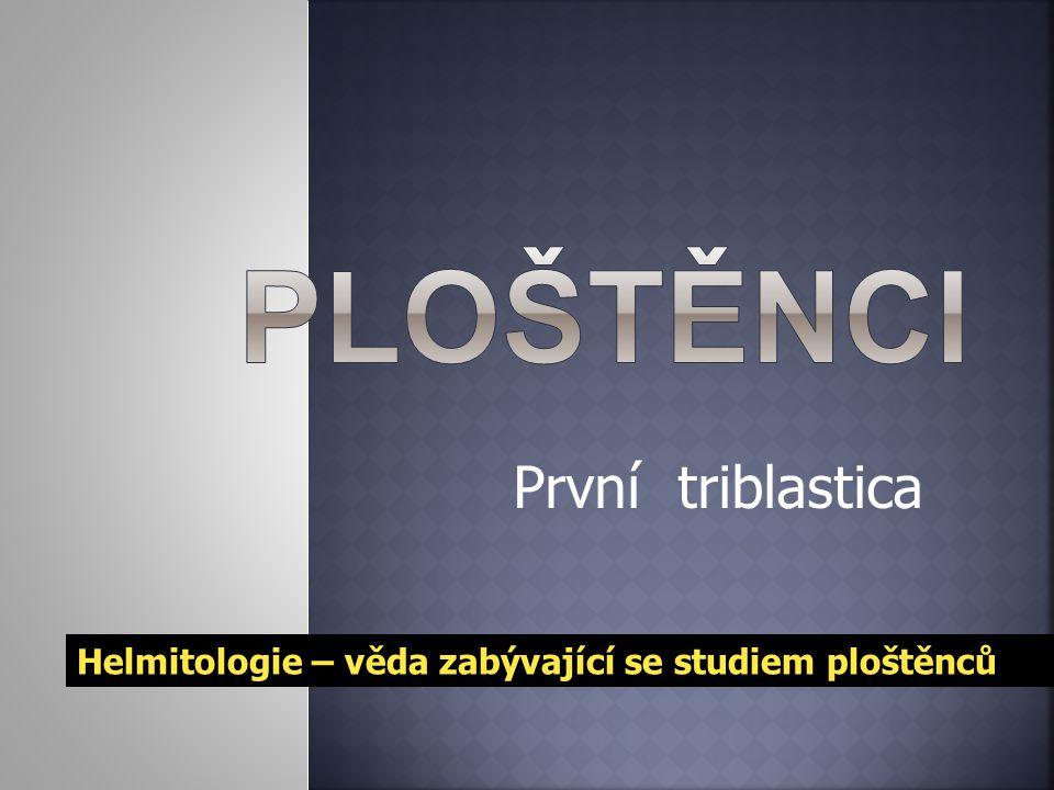 ploštěnci První triblastica