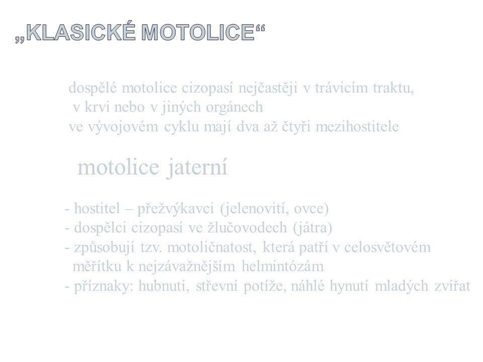 """motolice jaterní """"klasické motolice"""