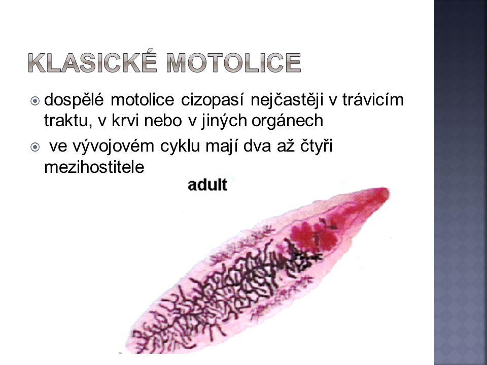 Klasické motolice dospělé motolice cizopasí nejčastěji v trávicím traktu, v krvi nebo v jiných orgánech.