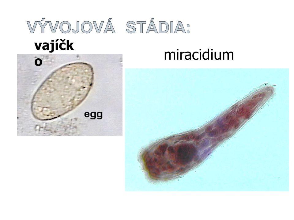 Vývojová stádia: vajíčko miracidium