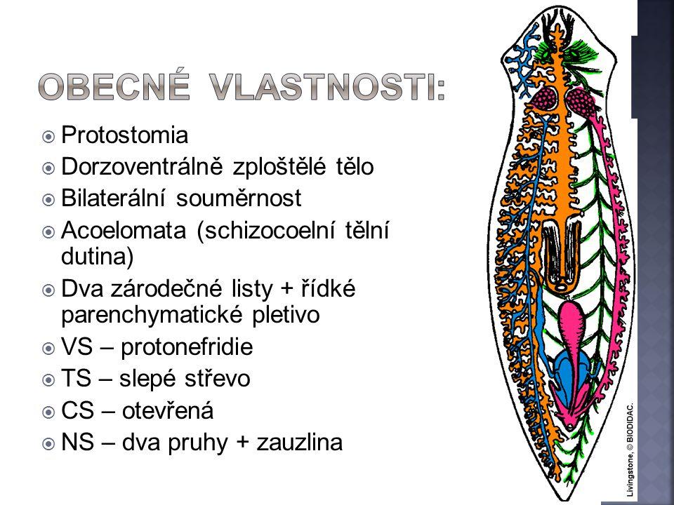 Obecné vlastnosti: Protostomia Dorzoventrálně zploštělé tělo