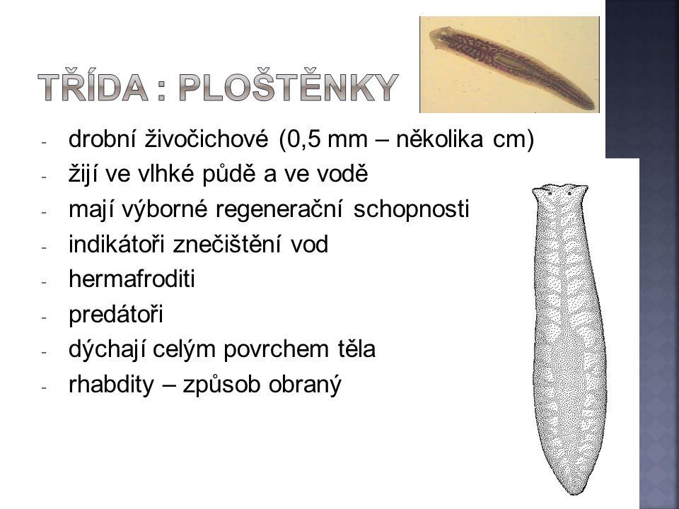 TŘÍDA : ploštěnky drobní živočichové (0,5 mm – několika cm)